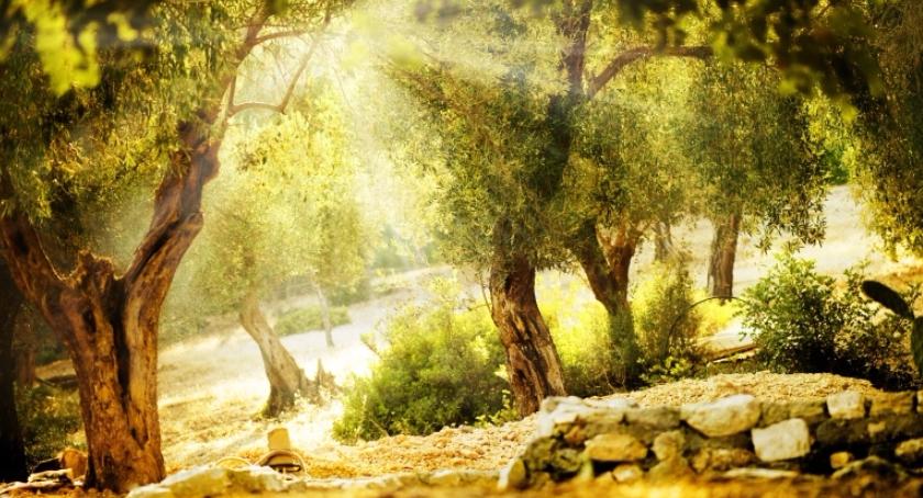 Zieleń, Rozhuśtaj pomysłami swój ogród - zdjęcie, fotografia