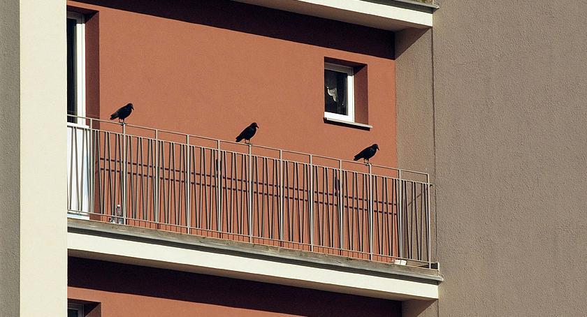 Zwierzęta Śródmieścia , Ptaszki Górnośląskiej - zdjęcie, fotografia