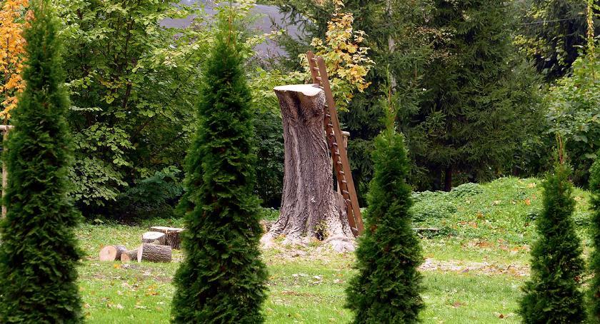 Aktualnosci , Wycinanie drzewa terenie szpitala - zdjęcie, fotografia